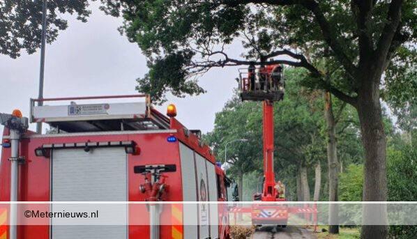brandweer zaagt takken uit bomen in Rolde