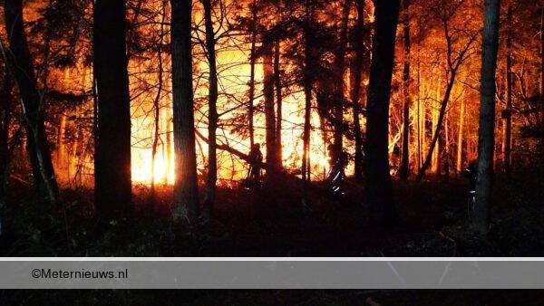 brandbosgebiedAssen4